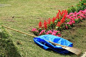 庭の清掃(草刈)